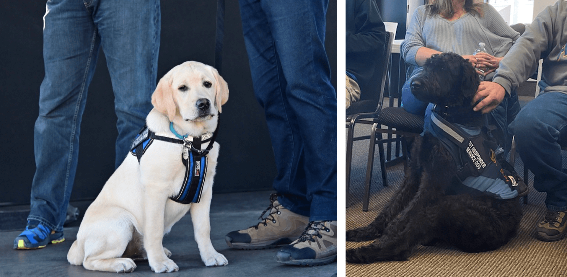 #TapCulture with Nick Metz - therapy dogs